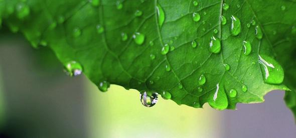 Leaf After Rain